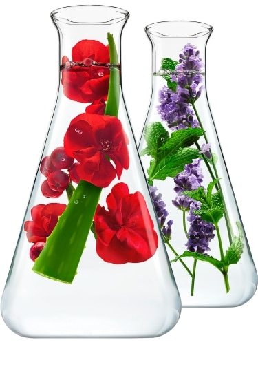 Two Beakers with Geranium and Lavender